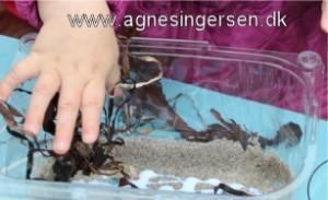 akvarie13