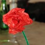 Nem rose