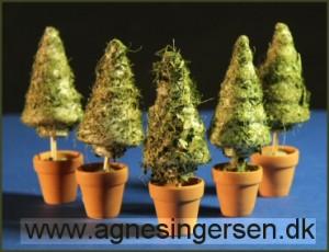 bladkegletræ1