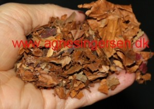 keglebladtræ2