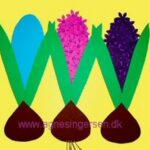 Hyacinter i flere sværhedsgrader